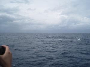 Hawaii - 2013 053
