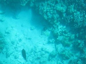 Hawaii - 2013 109